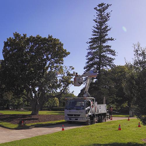 Citywide Arboriculture Australia Sponsorship